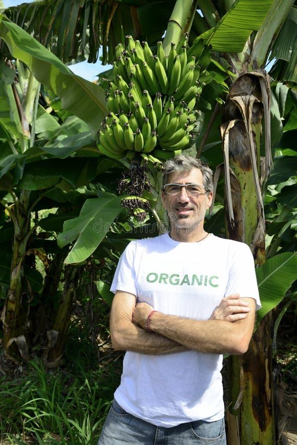 Fazendeiro orgânico na frente da plantação de banana fotos de stock