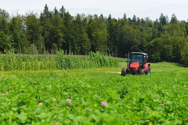 Fazendeiro orgânico no campo de sega do trevo do trator com cortador giratório imagem de stock royalty free
