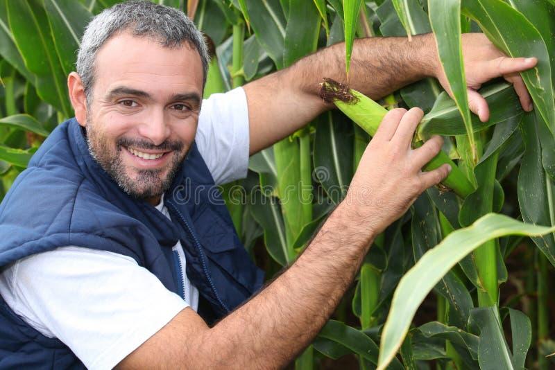 Fazendeiro que ajoelha-se pela colheita foto de stock royalty free