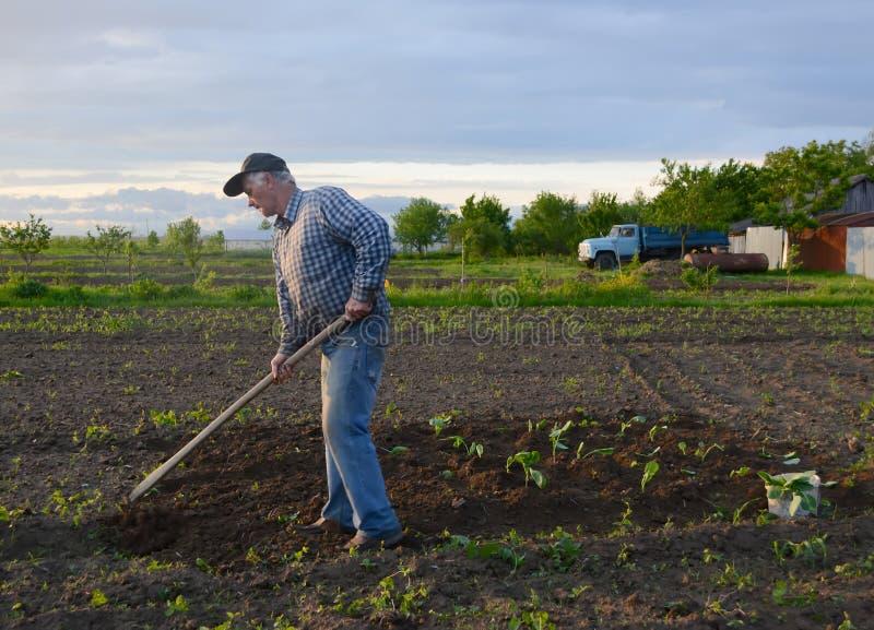 Fazendeiro que capina o jardim vegetal imagens de stock