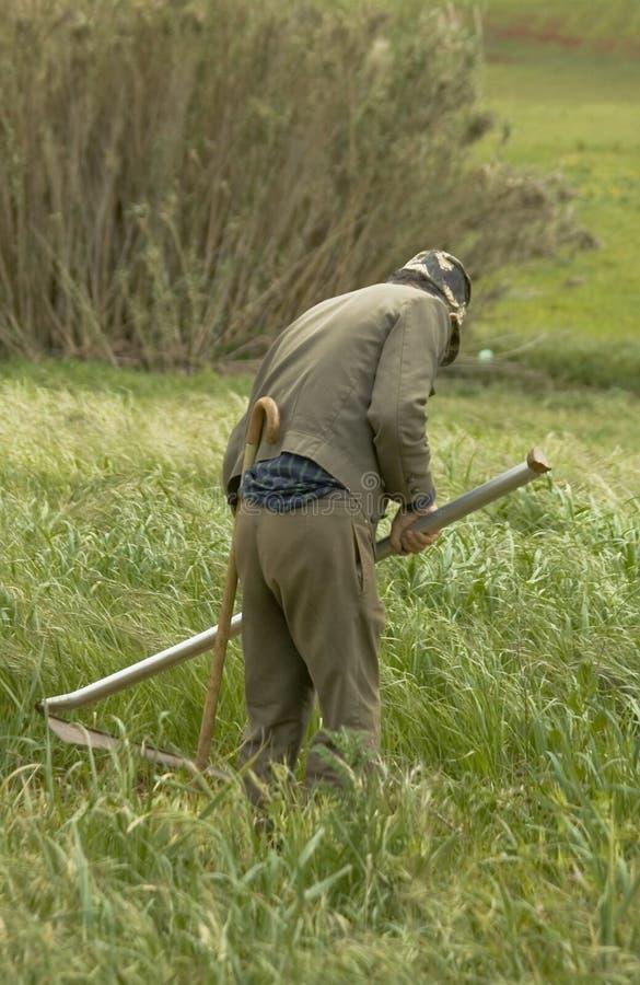 Fazendeiro que corta a grama fotografia de stock