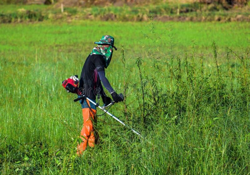 Fazendeiro que corta a grama pelo cortador de grama Grama de sega do homem pelo brushcutter foto de stock