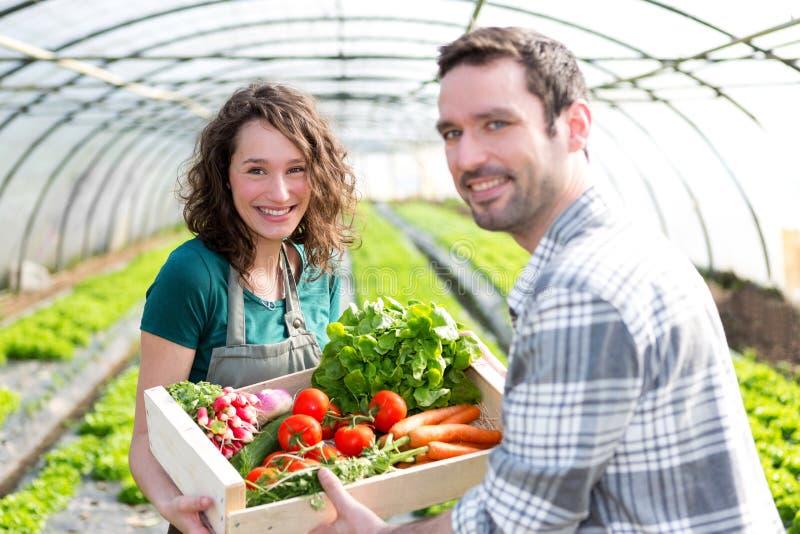 Fazendeiro que ensina o empregado novo à jardinagem fotografia de stock royalty free