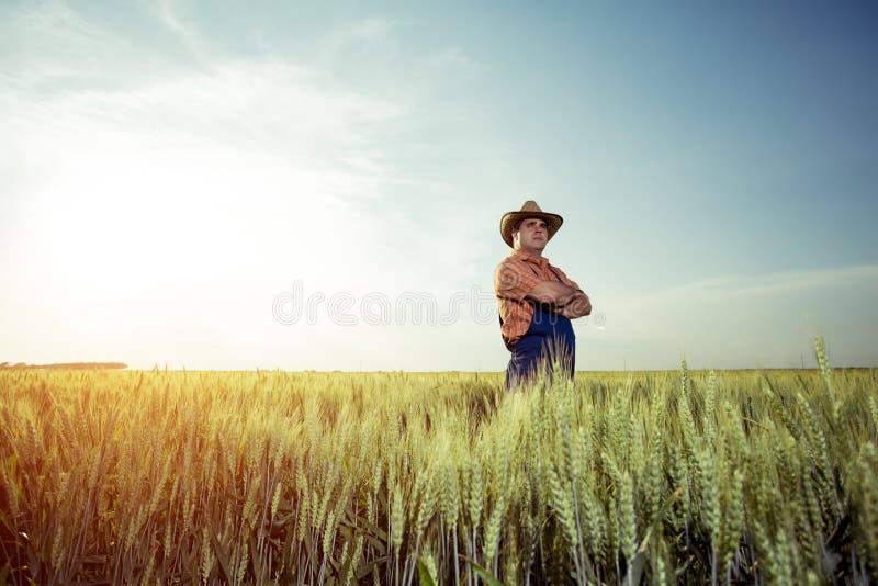 Fazendeiro que está em um campo de trigo fotografia de stock royalty free
