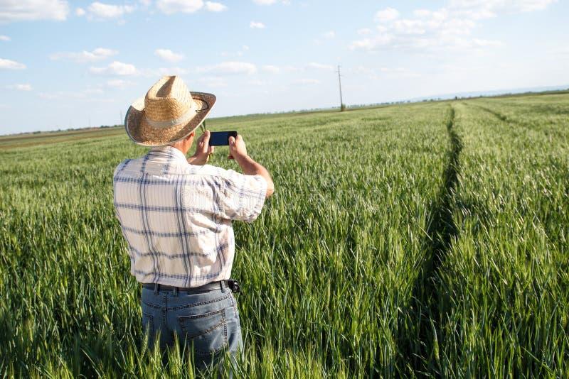 Fazendeiro que está em um campo de trigo foto de stock
