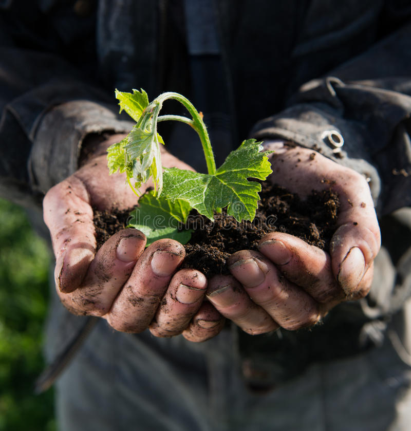 Fazendeiro que guardara a planta nova verde foto de stock
