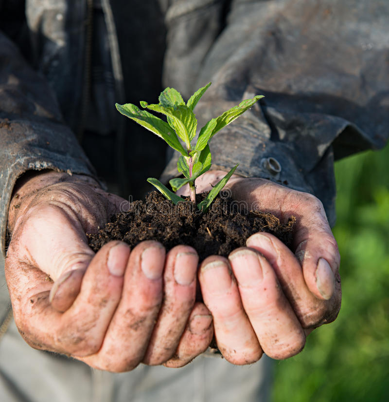 Fazendeiro que guardara a planta nova verde fotos de stock