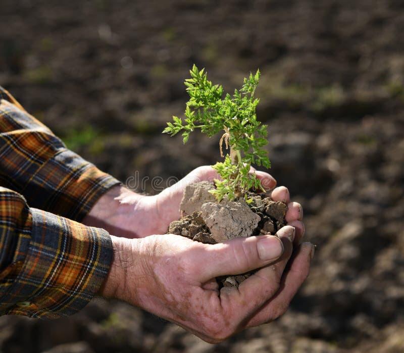 Fazendeiro que guardara a planta nova verde fotografia de stock