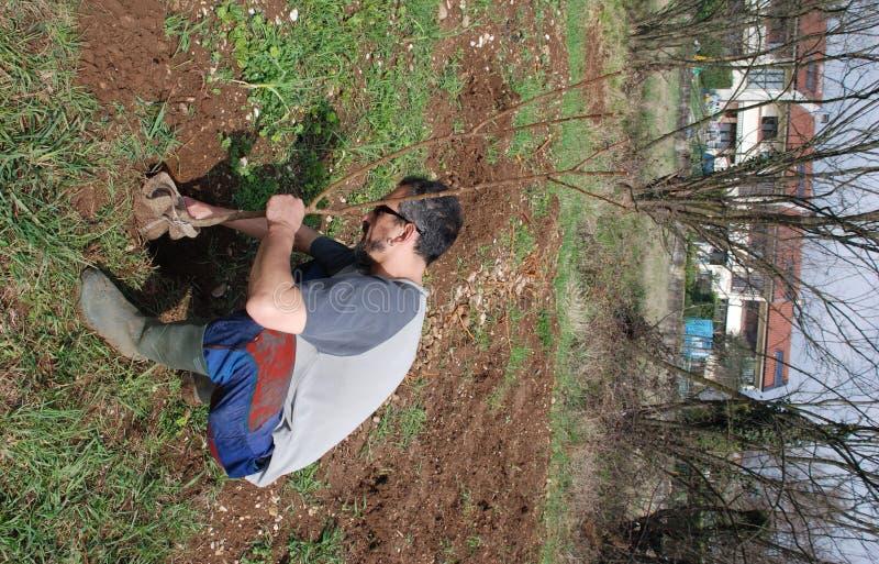 Fazendeiro que planta a árvore de fruta 1 imagens de stock