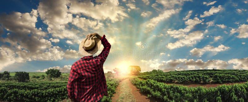 Fazendeiro que trabalha no campo do café no por do sol exterior imagem de stock
