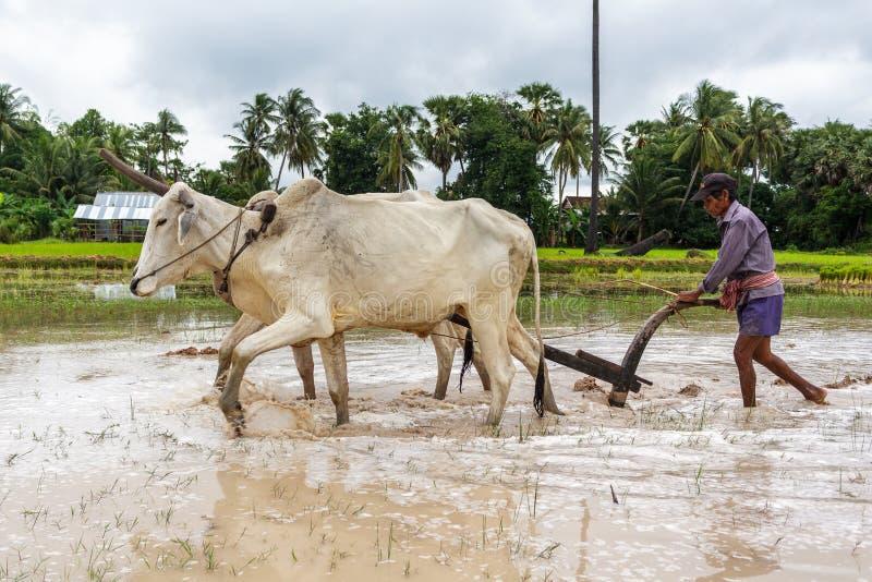 Fazendeiro que usa um arado em Camboja imagem de stock royalty free