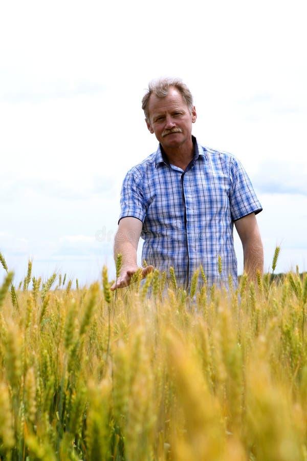 Fazendeiro que verifica o campo do feijão de soja A tecnologia original do crescimento imagem de stock royalty free