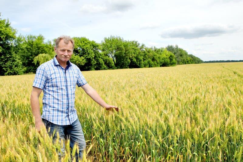 Fazendeiro que verifica o campo do feijão de soja A tecnologia original do crescimento fotos de stock