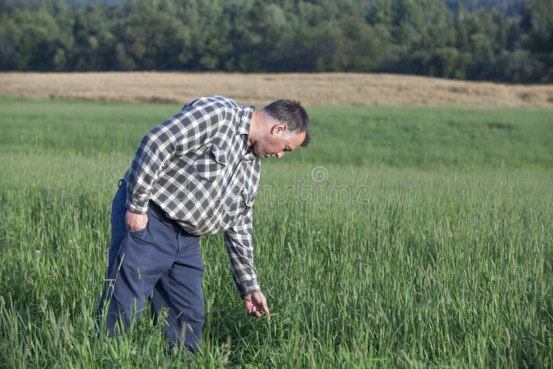 Fazendeiro que verifica sua colheita fotos de stock royalty free