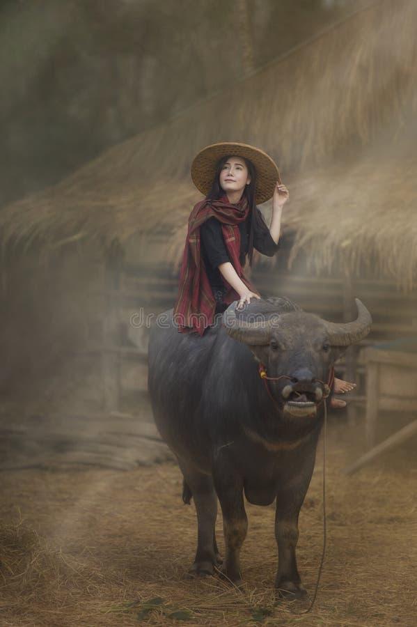 Fazendeiro tailandês da mulher asiática que senta-se em um búfalo no campo foto de stock