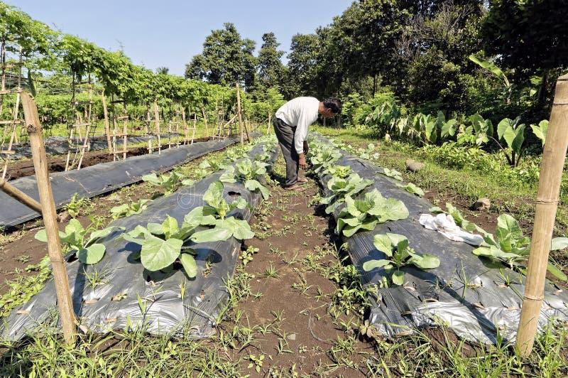 Fazendeiro vegetal foto de stock