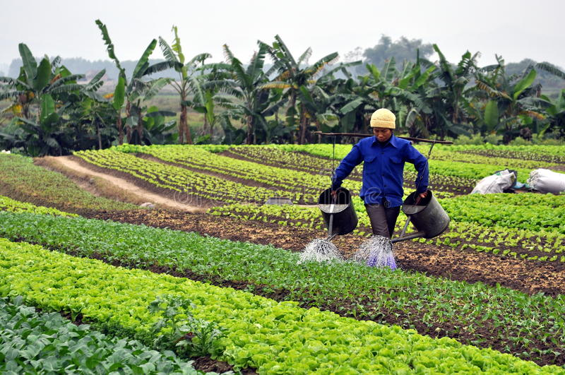 Fazendeiro vietnamiano no campo fotografia de stock