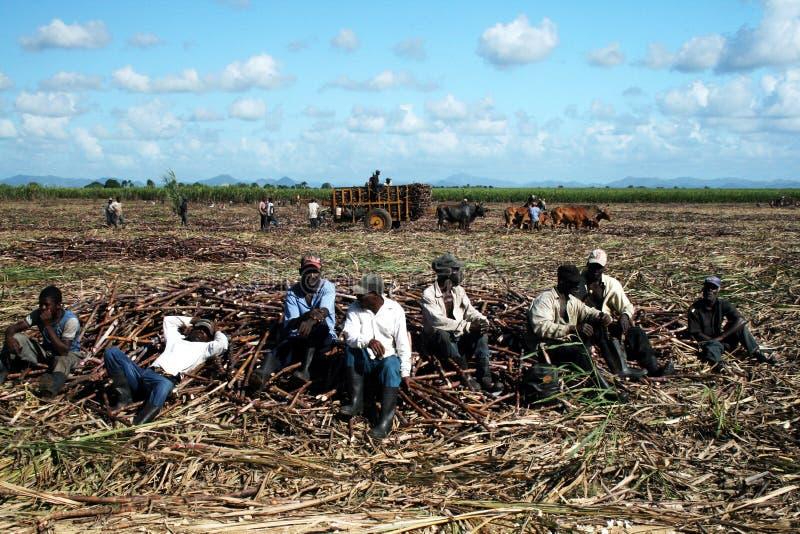 Fazendeiros cansados foto de stock royalty free