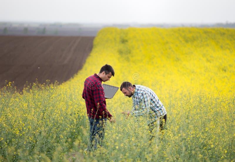 Fazendeiros com o portátil no campo rapessed imagens de stock