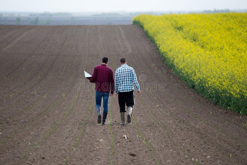Fazendeiros com o portátil no campo rapessed imagens de stock royalty free