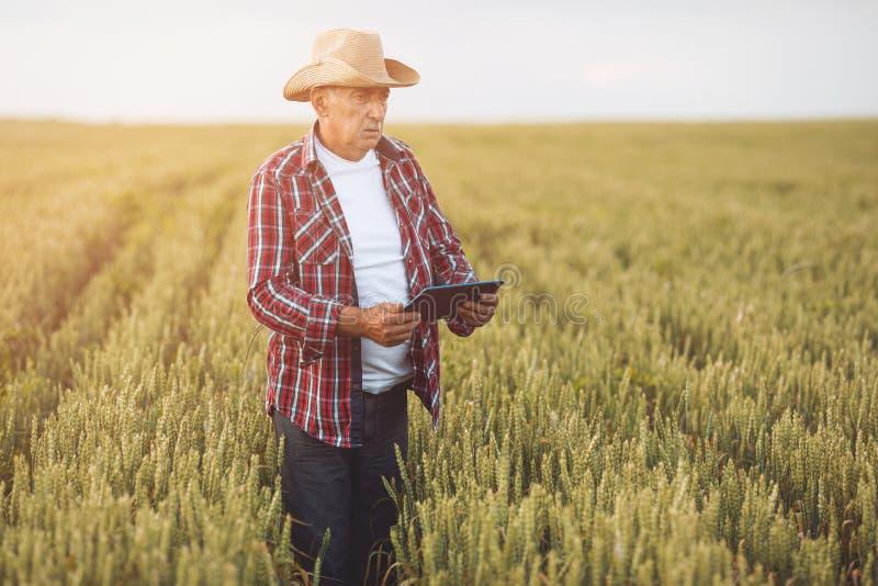 Fazendeiros com tabuleta em um campo de trigo Cultivo esperto fotografia de stock