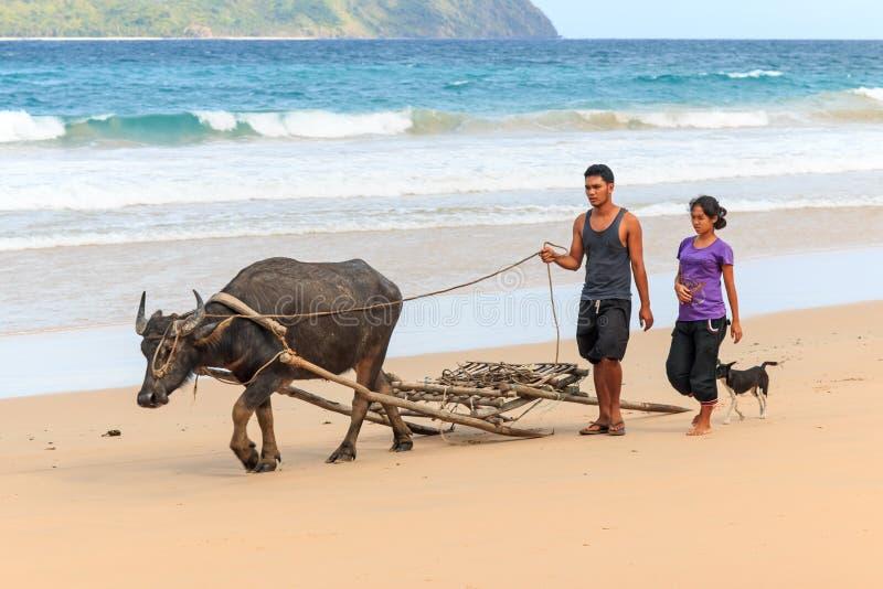 Fazendeiros de Nacpan que andam na praia com um búfalo-da-índia, o búfalo de água imagens de stock royalty free