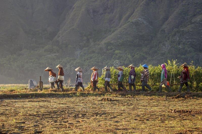 Fazendeiros de Woman's foto de stock royalty free