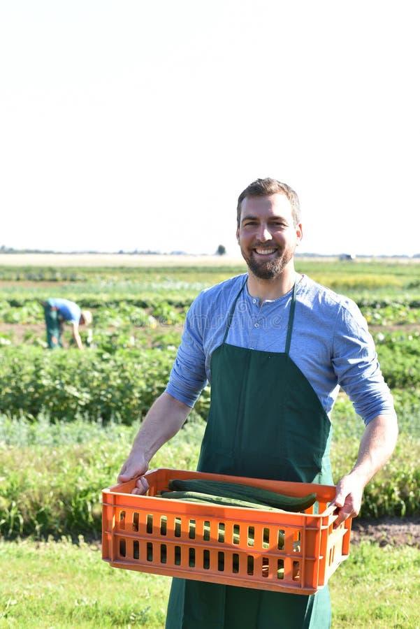 Fazendeiros na agricultura - cultivo dos vegetais fotografia de stock royalty free