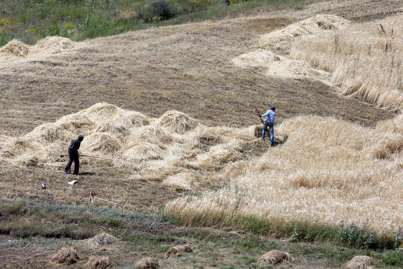 Fazendeiros que cortam o feno perto do local da arca de Noah perto da cidade de Dogabeyazit no leste distante de Turquia imagens de stock