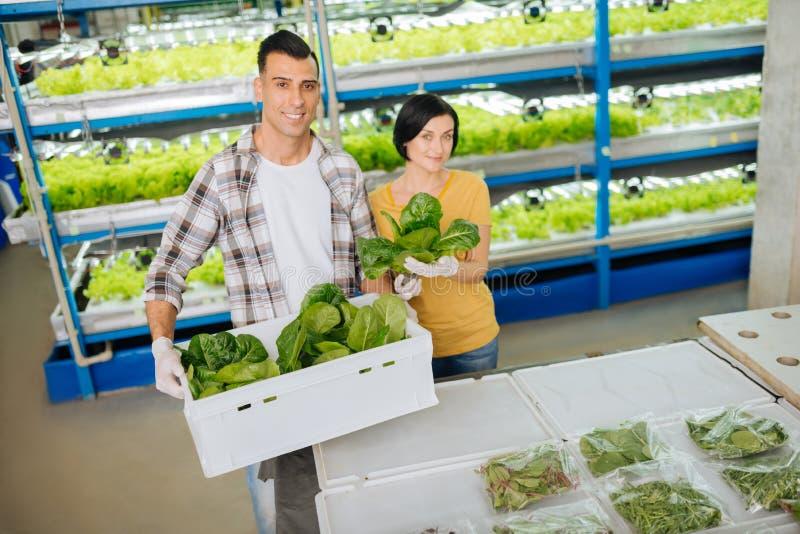 Fazendeiros que guardam a caixa com os verdes que estão na estufa imagens de stock