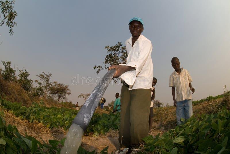 Fazendeiros que molham colheitas em Zimbabwe imagens de stock