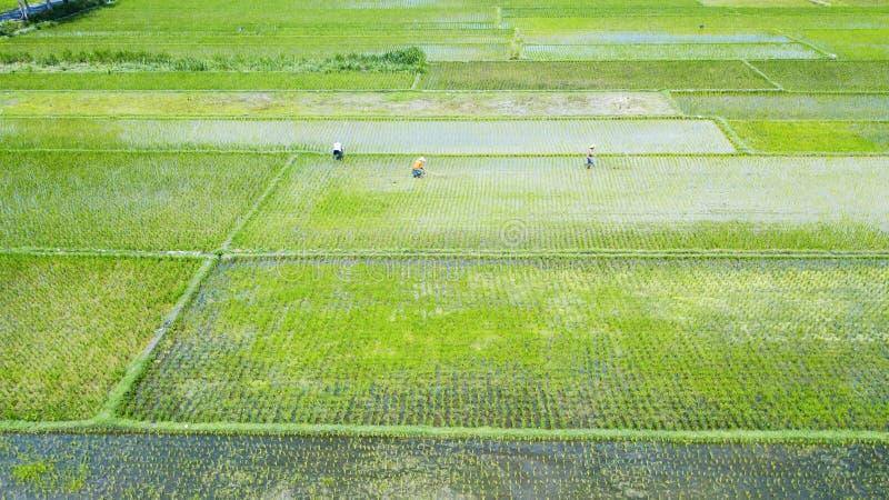 Fazendeiros que trabalham no campo de almofada verde imagens de stock
