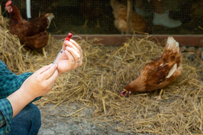 fazendeiros que vão vacinar para impedir a epidemia imagens de stock