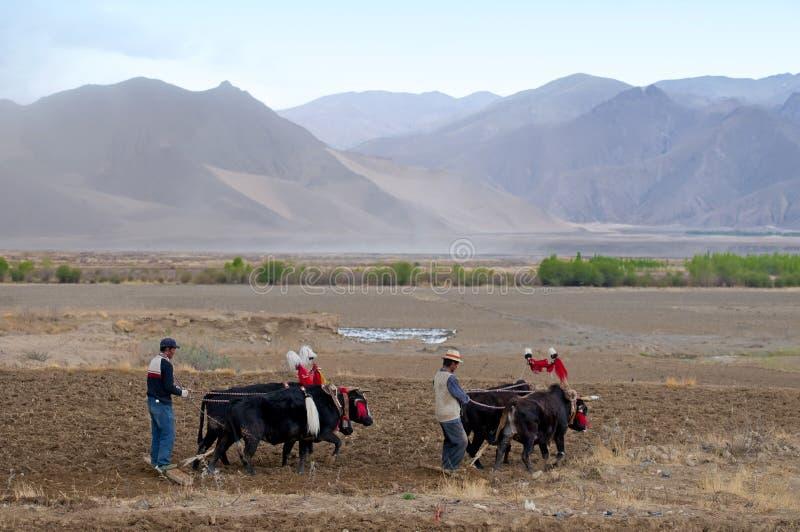 Fazendeiros tibetanos foto de stock royalty free