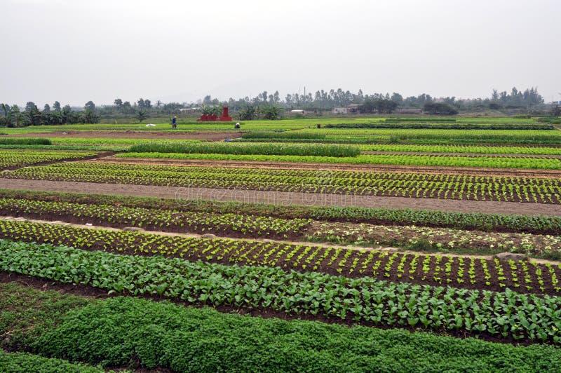 Fazendeiros vietnamianos no campo fotos de stock royalty free