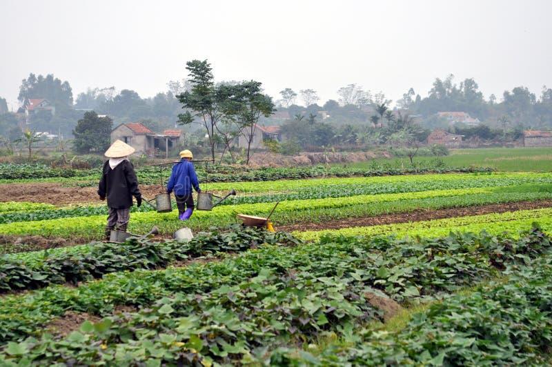 Fazendeiros vietnamianos no campo imagem de stock