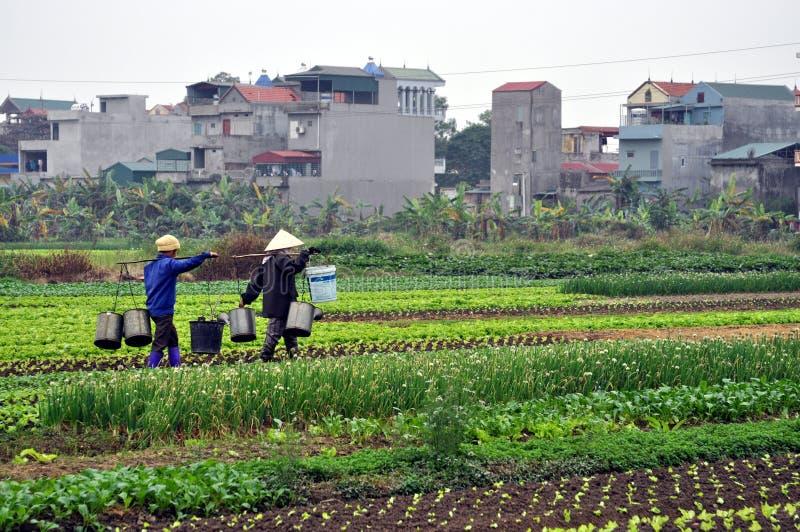 Fazendeiros vietnamianos no campo com a cidade no fundo fotografia de stock royalty free