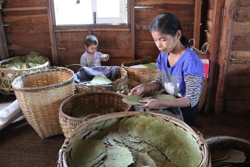 Fazendo charutos burmese imagem de stock