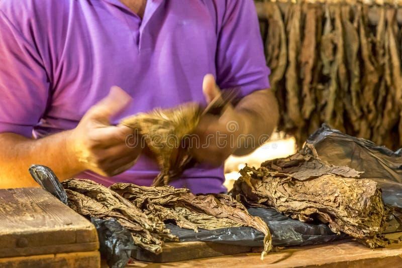 Fazendo charutos em Vinales, Cuba #1/21 imagem de stock