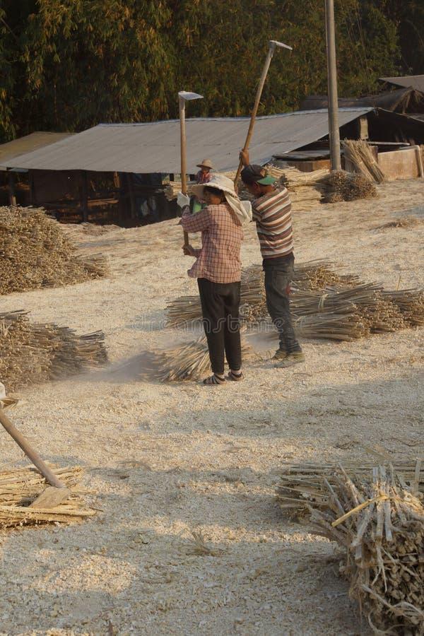 Fazendo o papel de bambu imagens de stock royalty free