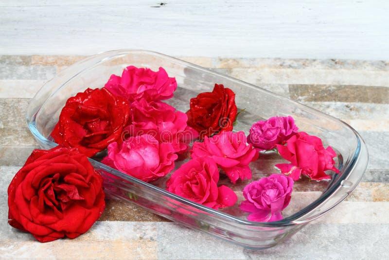 Fazendo o remédio da flor de Bach das rosas bonitas fotos de stock royalty free