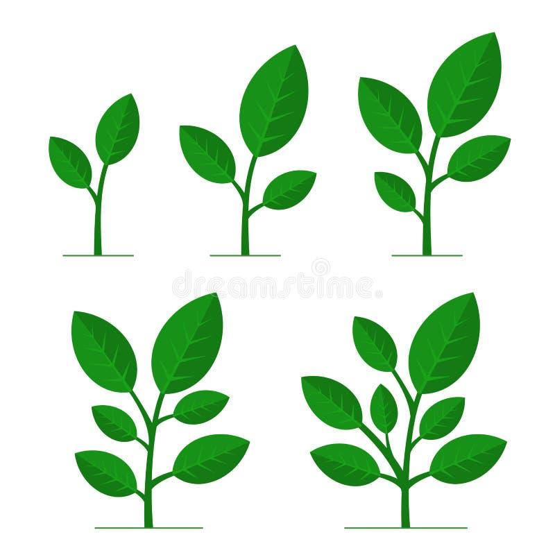 Fazy rośliny dorośnięcie Ustawiający na Białym tle wektor royalty ilustracja