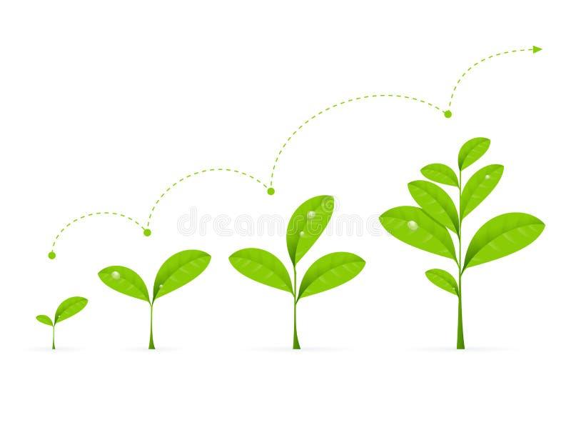 Fazy Zielonej rośliny dorośnięcie wektor ilustracji