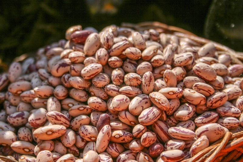 Borlotti beans close up. Dried Borlotti beans closeup, showing the red and white patterns of the beans assortment background basket bio biological bowl brown stock image