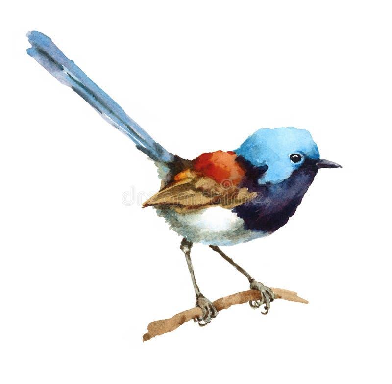 Fe Wren Bird på handen Painted som för filialvattenfärgillustration isoleras på vit bakgrund stock illustrationer