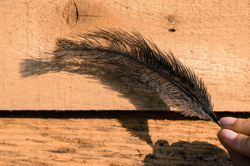 Feader d'autruche photos libres de droits
