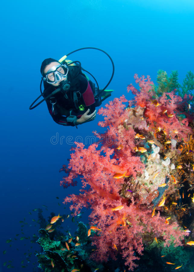 Free Feamle Scuba Diver And Colourful Coral Reef Stock Image - 16089841