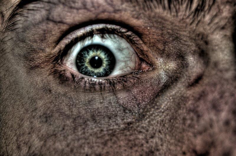 Fearful Eye Stock Photo