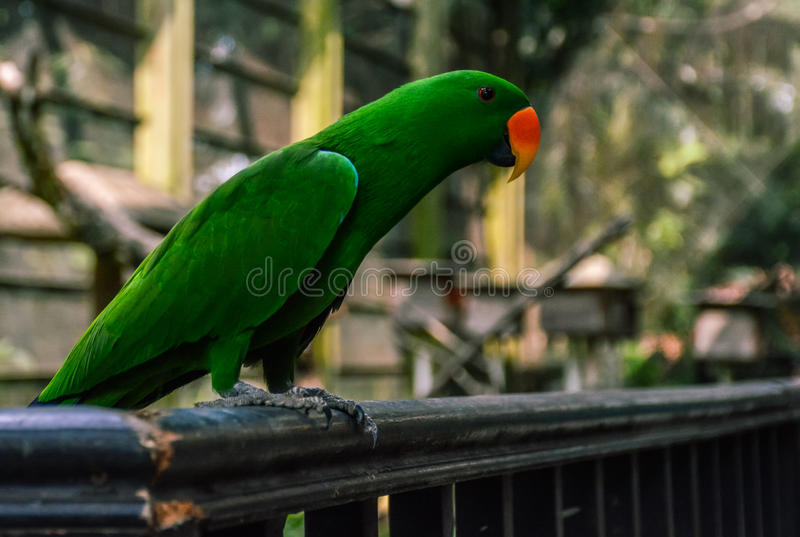 Fearless green royalty free stock images