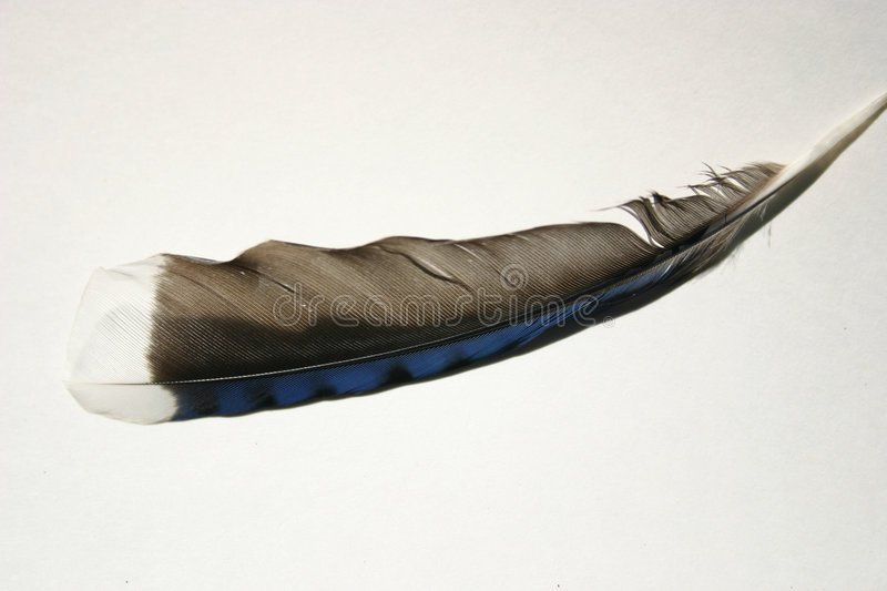 Download Feather 1 stock image. Image of feather, design, bird, detail - 17017